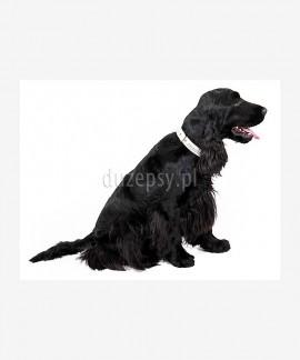 Obroża dla małego psa zdobiona kryształkami GLAMOUR