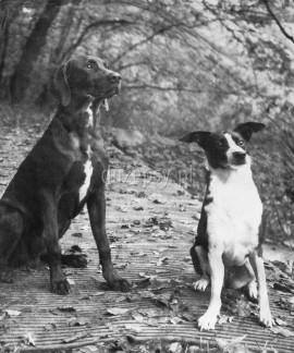 Ekskluzywne legowisko dla dużego psa materac WILDLIFE 70-110 cm