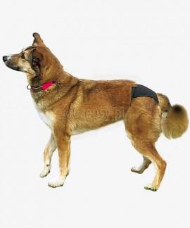 Majtki dla psów na cieczkę PROTECTIVE PANTS Trixie