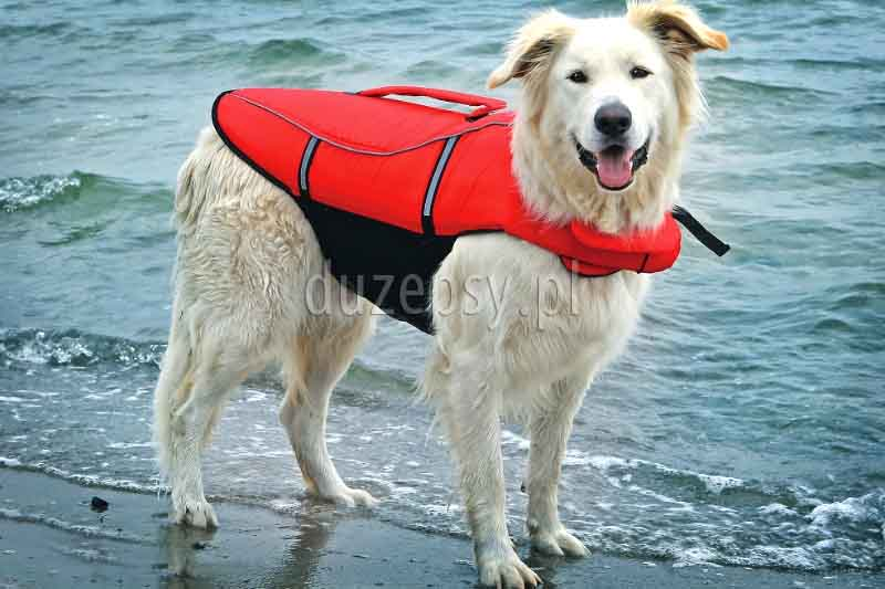Kamizelka ratunkowa dla psa Trixie. Kamizelka do pływania dla psa. Kapok do pływania dla psa. Kamizelki ratunkowe dla psów.