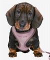 Szelki dla szczeniaka + smycz regulowana Trixie JUNIOR obw. 26-34 cm