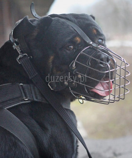 Kaganiec dla psa rottweiler metalowy wzmocniony Dingo Gear