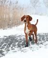 Buty dla psa antypoślizgowe WALKER ACTIVE Trixie