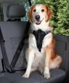 Szelki samochodowe dla psa Trixie S-XL