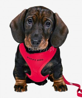 Szelki dla szczeniąt bezuciskowe + smycz regulowana Trixie PUPPY DOG obw. 26-34 cm