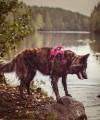 Hurtta szelki ACTIVE dla psów aktywnych do 120 cm
