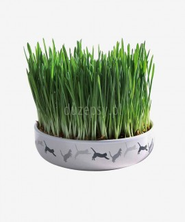 Miska ceramiczna na trawę dla kota z nasionami Trixie ø 15 cm