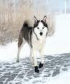 Buty dla psów aktywnych WALKER ACTIVE Trixie