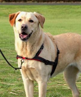 Szelki dla psa, który ciągnie Lead'n'Walk Soft Basic Trixie