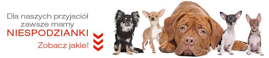 Promocje w sklepie zoologicznym DuzePsy.pl/ Aktualne kody rabatowe na akcesoria dla psów. Karmy dla psa promocje.