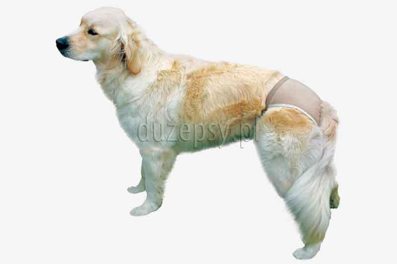 Majtki na cieczkę dla suki PROTECTIVE PANTS Trixie. Majtki dla psa, majtki dla psów, majtki dla suk na cieczkę, majtki na cieczkę dla dużego psa, majtki dla dużej suki; sklep zoologiczny; duzepsy.pl;