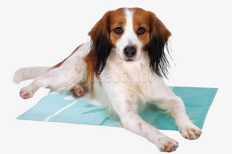 Mata chłodząca dla psa, legowiska dla psa sklep, legowisko dla psa trixie, mata bagażnikowa dla psa. Legowiska dla dużego psa. Legowiska dla psów do ogrodu. Mata dla psa 90 cm. Duża mata dla psa sklep zoologiczny internetowy Duzepsy.pl.
