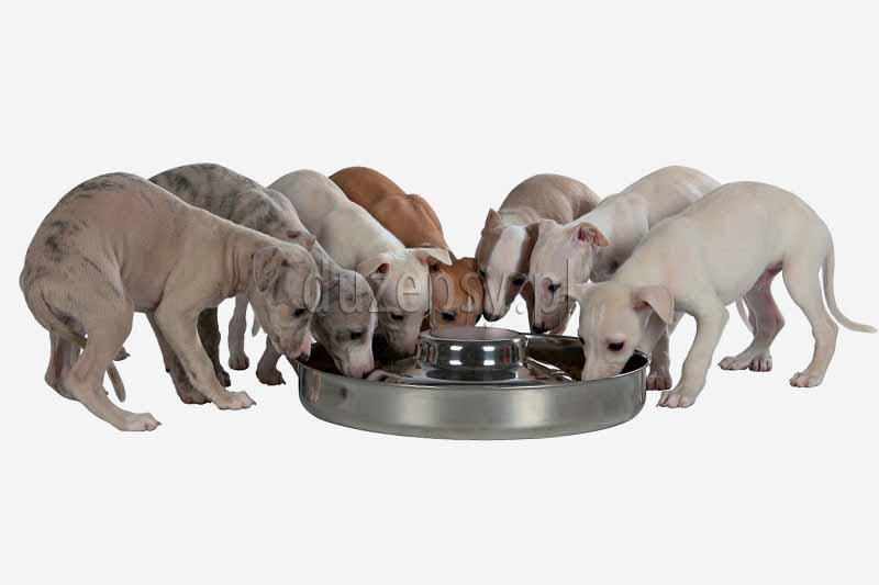 miska dla szczeniąt stal nierdzewna Trixie; miski dla szczeniąt; miska dla psa Trixie; akcesoria dla szczeniąt; wyprawka dla szczeniąt; miski dla szczeniąt sklep; sklep zoologiczny; hurtownia zoologiczna; DuzePsy.pl; artykuły dla zwierząt; akcesoria dla psów