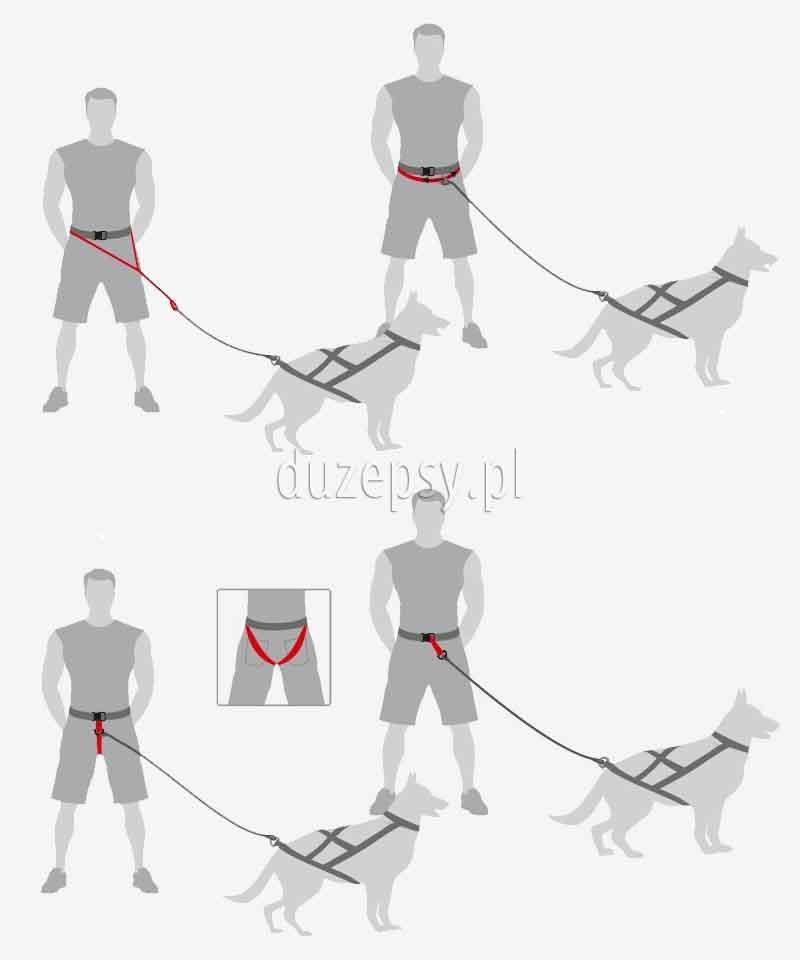 Pas do canicrossu. Pas do biegania z psem - do canicrossu dogtrekkingu joggingu 4 w 1 DINGO. Pas do biegania z psem. Pas do canicrossu; sprzęt do canicrossu, uprząż do canicrossu, pas dogtrekkingowy, canicross sklep, pas biodrowy do biegania z psem, uprząż do biegania z psem, jogging z psem. Sprzęt do biegania z psem oferuje sklep zoologiczny DuzePsy.pl;