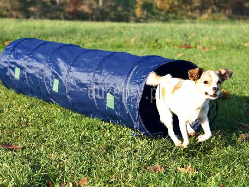 Tunel sprawnościowy do AGILITY, akcesoria do Agility; tunel do agility 2 metrowy; tunel do agility dla małego psa; tunele do szkolenia psa Agility; tunel do agility, tunel do szkolenia psa, akcesoria do sportów z psami, tunel Agility dla psa, zestaw Agility dla psa, tunel treningowy do Agility, tunel dla psa, sklep zoologiczny, duzepsy.pl